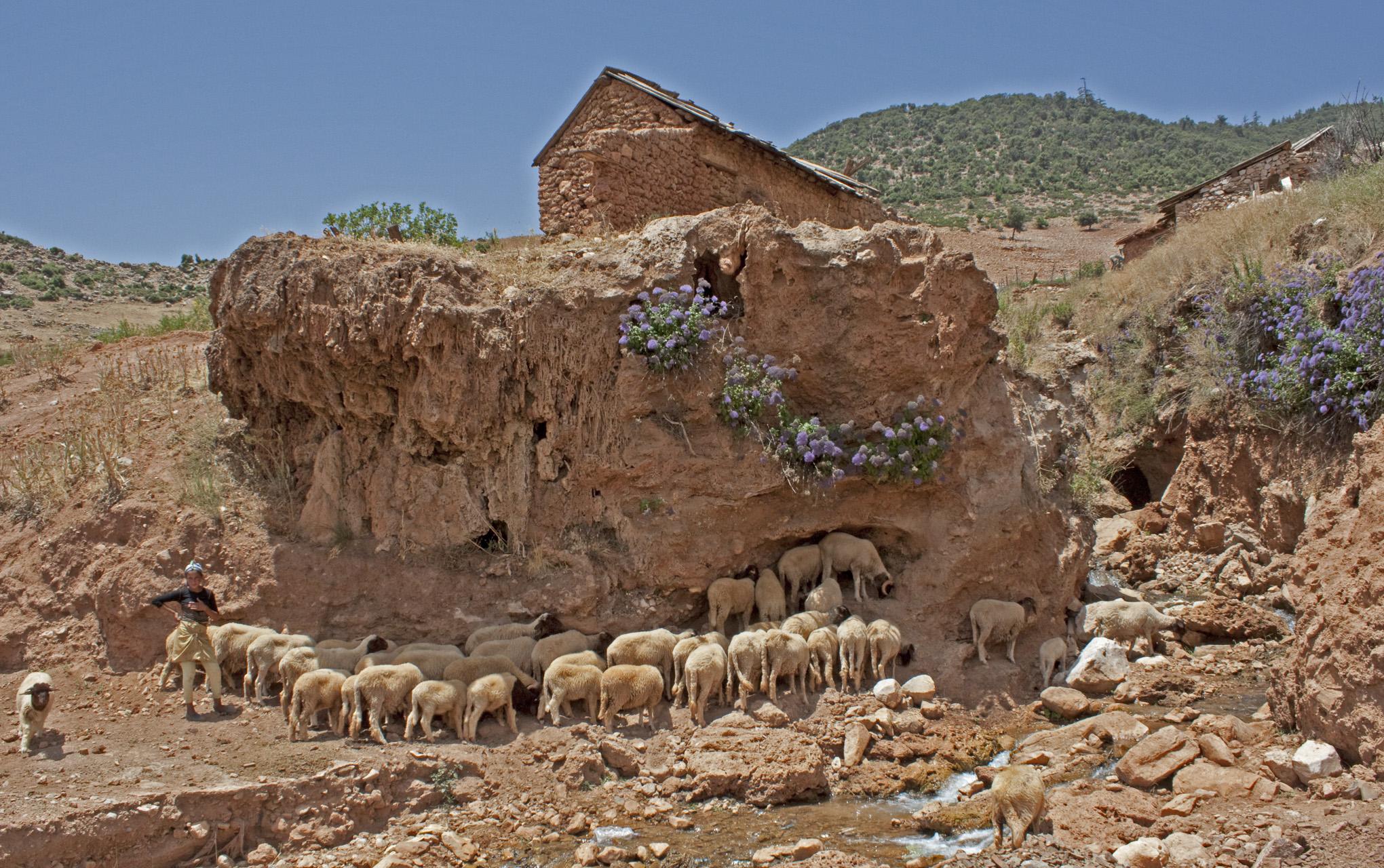 The Shepherdess, Middle Atlas,  2010