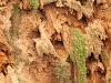 Waterfalls: Cascades Ouzoud - 3 150527_8